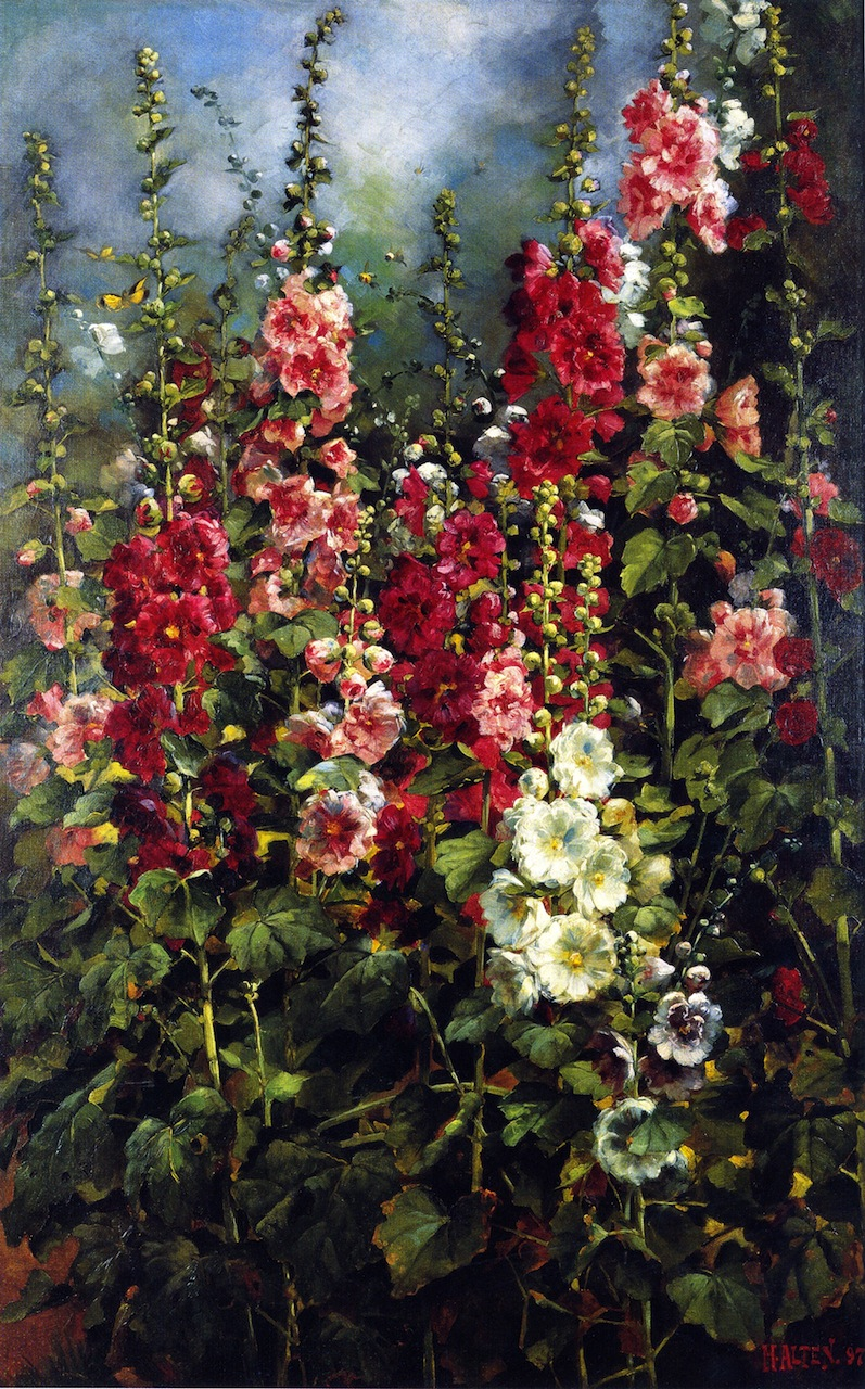 Hollyhocks   Mathias J Alten   oil painting