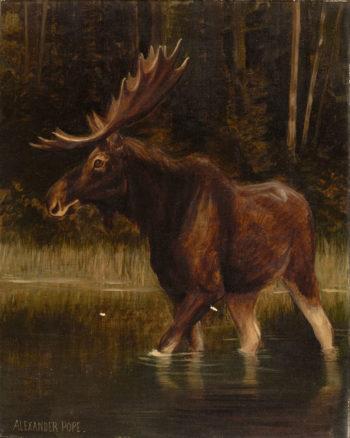 Moose | Alexander Pope | oil painting