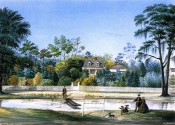 Balzamine | Marie Adrien Persac | oil painting