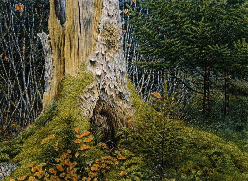 Wood Interior with Tree Stump | William George Richardson Hind | oil painting