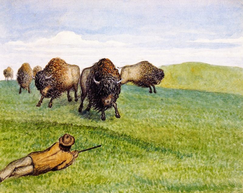 Hunting Buffalo | William George Richardson Hind | oil painting
