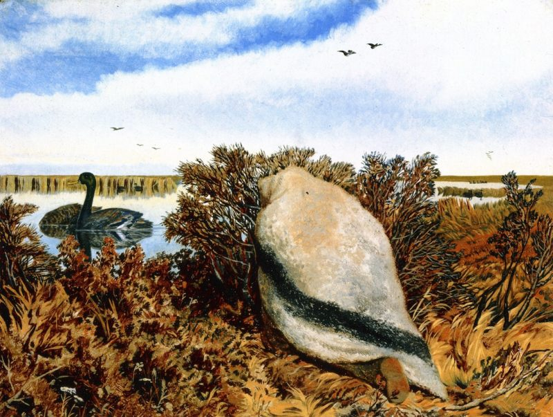 Duck Shooting   William George Richardson Hind   oil painting