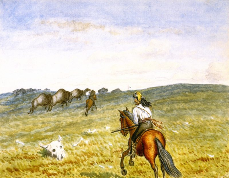 Buffalo on the Prarie | William George Richardson Hind | oil painting