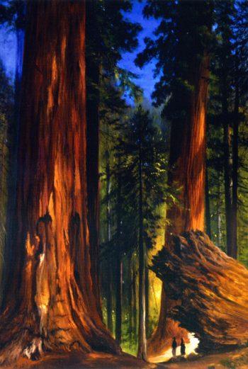 Giant Sequoias | Gilbert Munger | oil painting