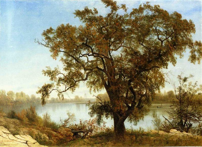 A View from Sacramento   Albert Bierstadt   oil painting