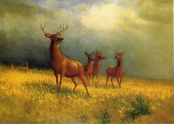 Deer in a Field | Albert Bierstadt | oil painting