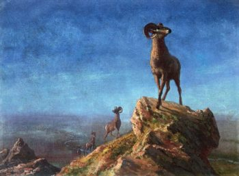Rocky Mountain Big Horns | Albert Bierstadt | oil painting