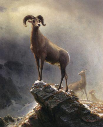 Rocky Mountain Sheep | Albert Bierstadt | oil painting
