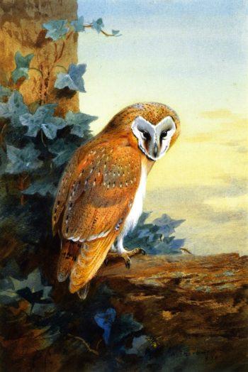 A Barn Owl | Archibald Thornburn | oil painting