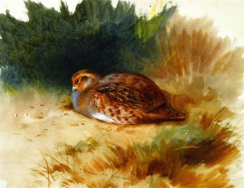 A Young Partridge | Archibald Thornburn | oil painting