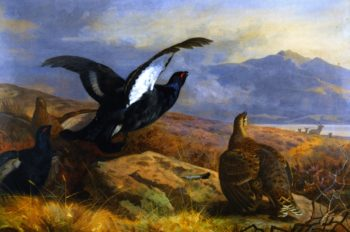 Black Grouse in a Highland Landscape with Red Deer in the Background | Archibald Thornburn | oil painting