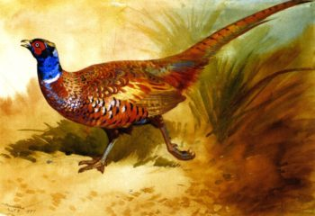 Cock Pheasant | Archibald Thornburn | oil painting