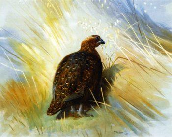 Grouse | Archibald Thornburn | oil painting
