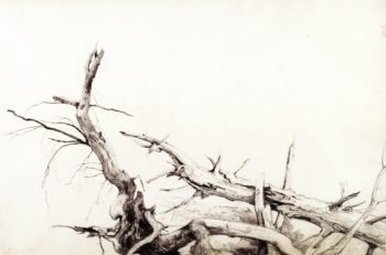 Study of Fallen Tree Trunks Bolton Lake George New York | Asher B Durand | oil painting