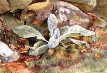 Mullen and Rocks | Charles Herbert Moore | oil painting