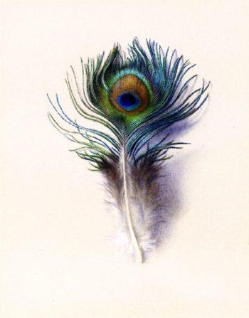 Peacock Feather   Charles Herbert Moore   oil painting