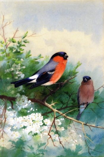A Pair of Bullfinches | Archibald Thorburn | oil painting