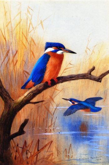 A Pair of Kingfishers | Archibald Thorburn | oil painting