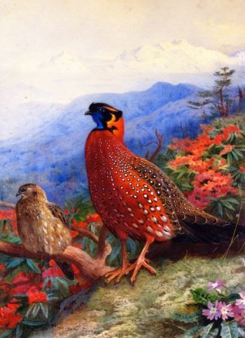 A Pair of Satyr Tragopans | Archibald Thorburn | oil painting
