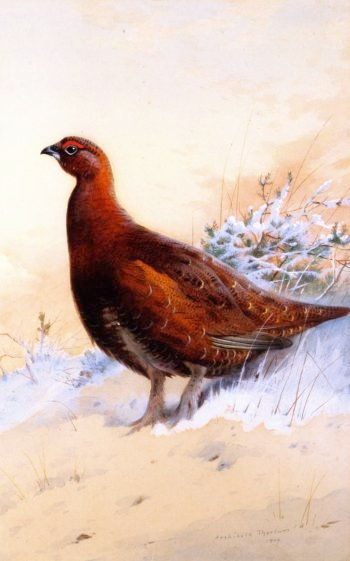A Red Grouse in the Snow | Archibald Thorburn | oil painting