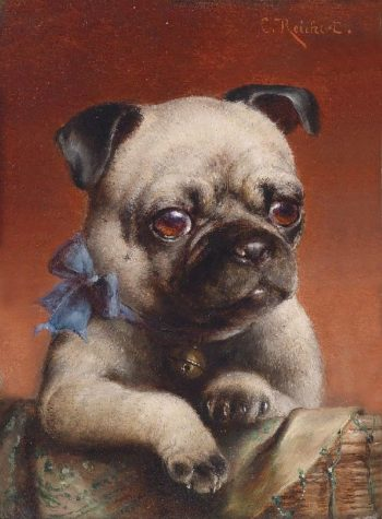 Young Pug | Carl Reichert | oil painting