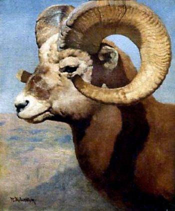 Bighorn Sheep | William Robinson Leigh | oil painting
