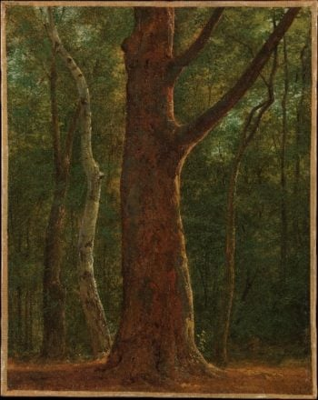 Beech Tree (ca 1820) | Achille-Etna Michallon | oil painting