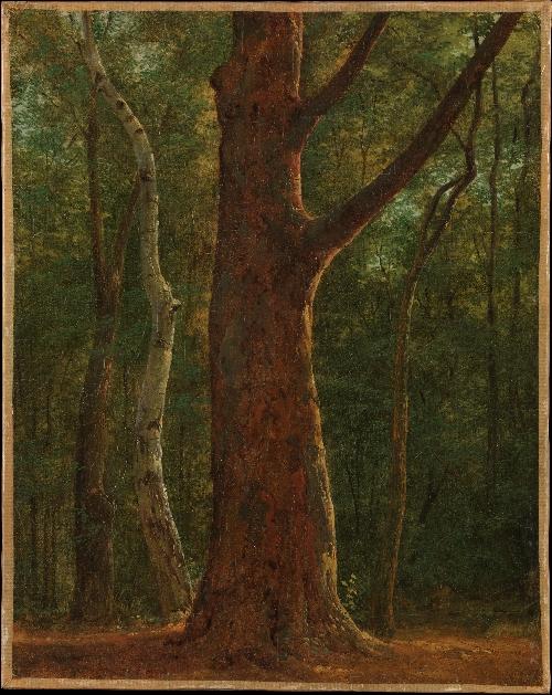 Beech Tree (ca 1820) | Achille-Etna Michallon | oil painting