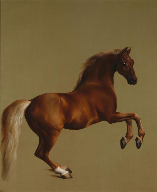 Whistlejacket | George Stubbs | oil painting