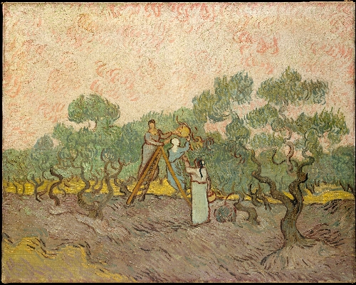 Women Picking Olives (1889) | Vincent van Gogh | oil painting