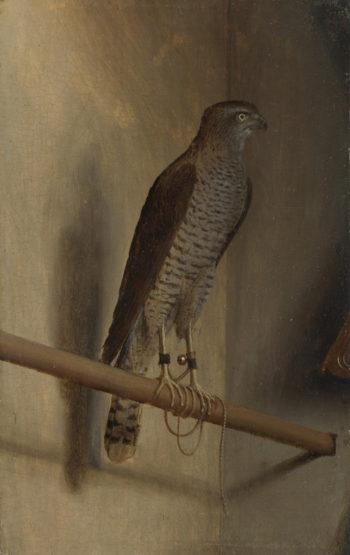 A Sparrowhawk | Jacopo de' Barbari | oil painting