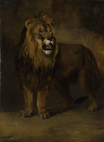 A lion from the menagerie of King Louis Napoleon