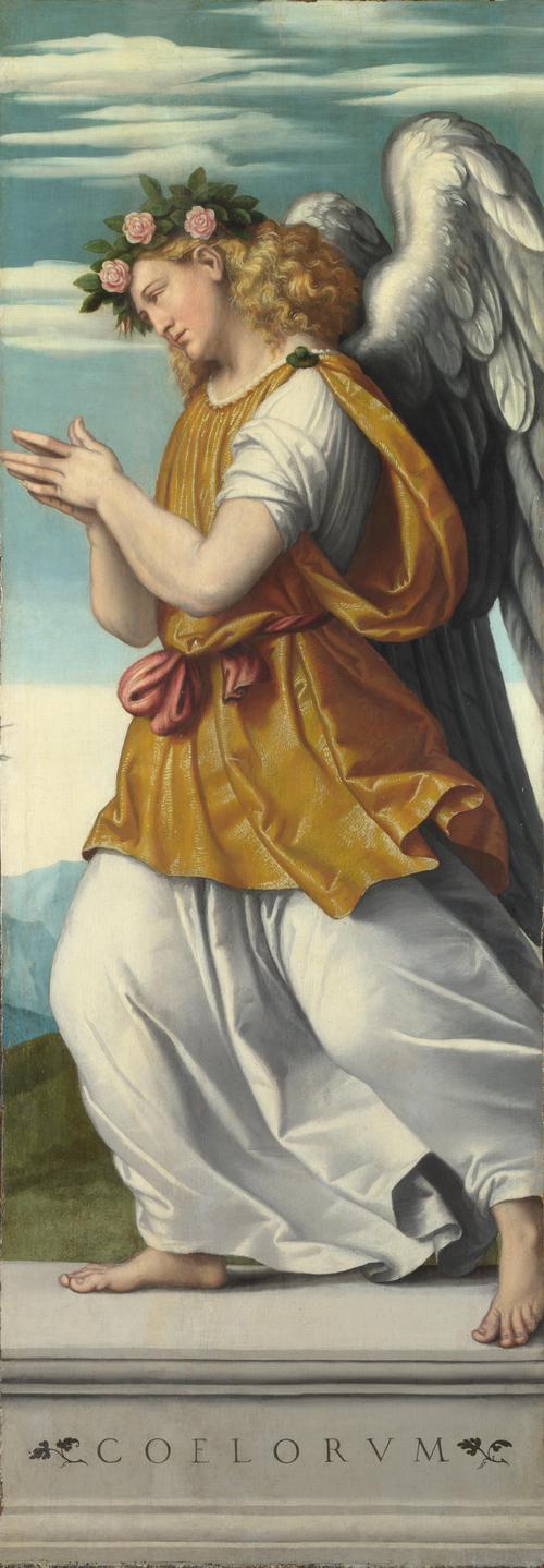 An Adoring Angel   Moretto da Brescia   oil painting