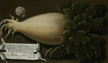A giant radish. 1626 | Anonymous | oil painting