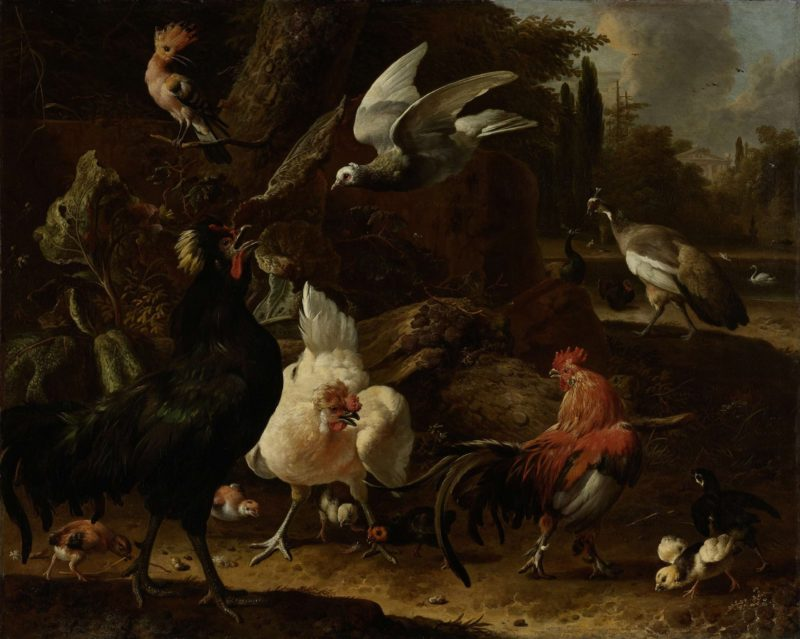 Birds in a park. 1686   Melchior d' Hondecoeter   oil painting