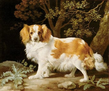 King Charles Spaniel | George Stubbs | oil painting