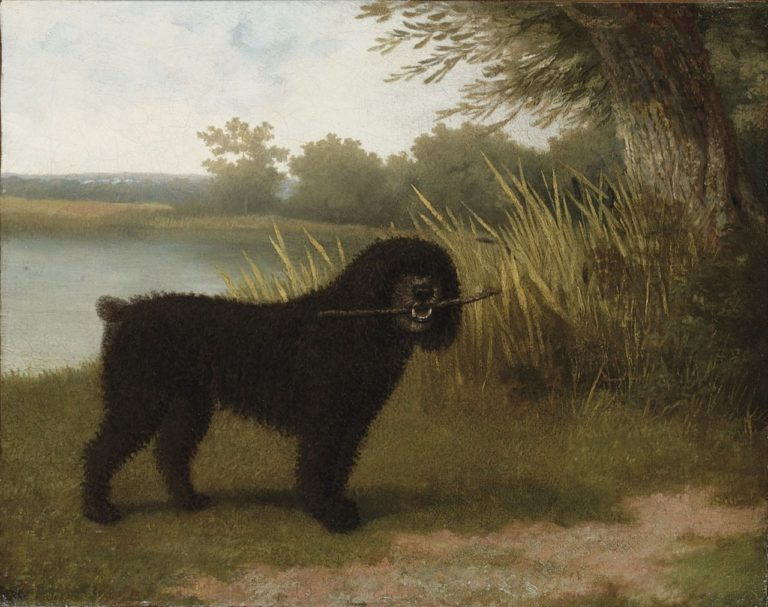 A black water dog with a stick by a lake | Jacques Laurent Agasse | oil painting