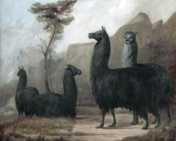 Alpacas | Jacques Laurent Agasse | oil painting
