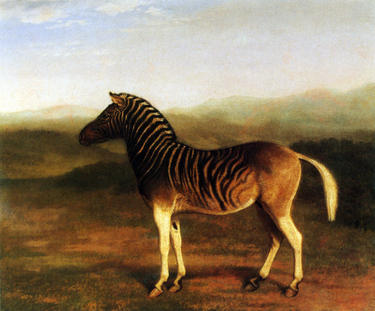 A Male Quagga from Africa | Jacques Laurent Agasse | oil painting
