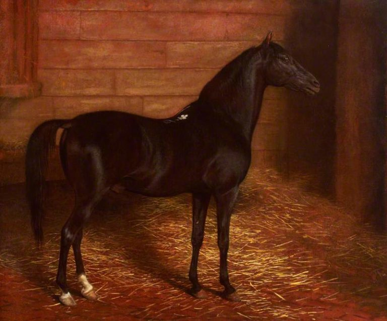 Arab Horse the Second Sire   Jacques Laurent Agasse   oil painting