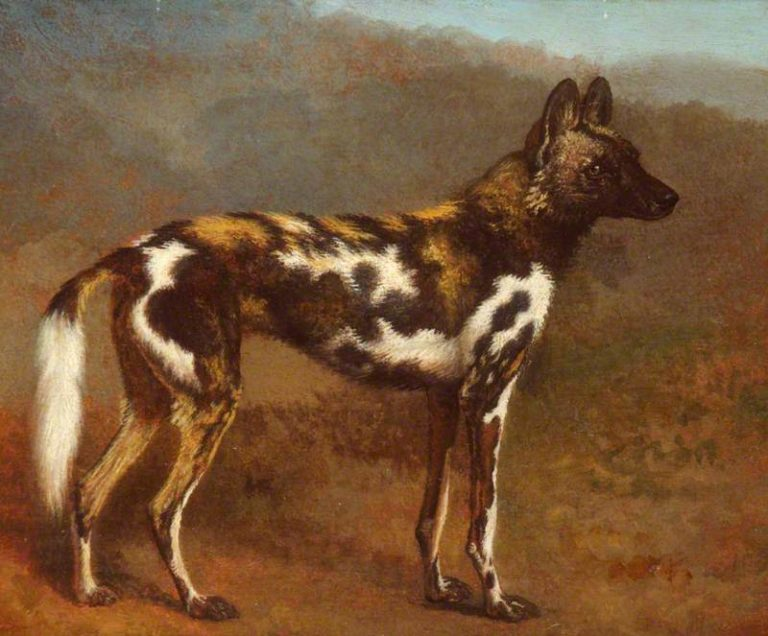 Cape Hunting Dog   Jacques Laurent Agasse   oil painting