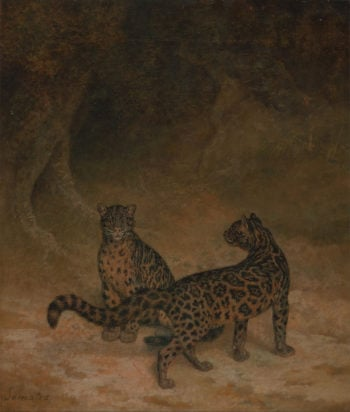 Clouded Leopards | Jacques Laurent Agasse | oil painting