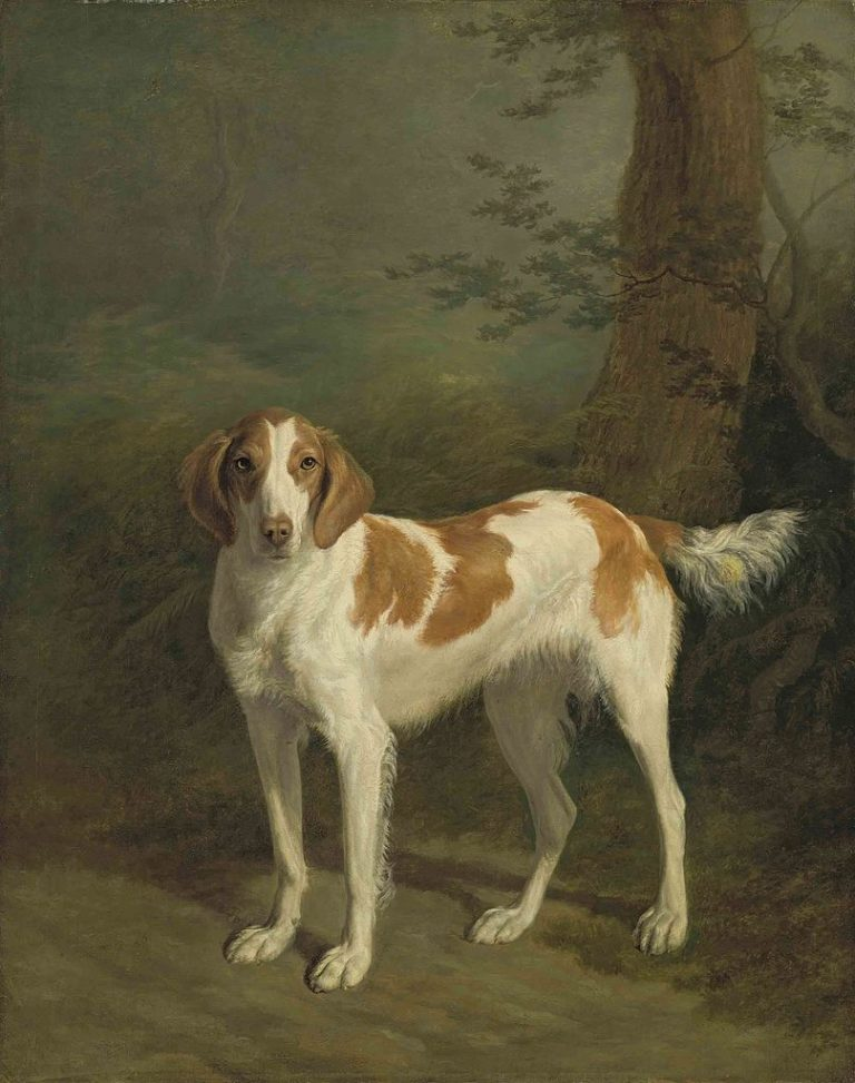 Dash a setter in a wooded landscape   Jacques Laurent Agasse   oil painting