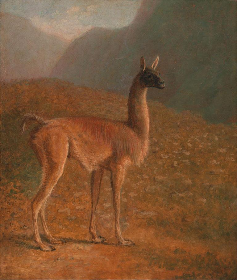 Guanaco   Jacques Laurent Agasse   oil painting