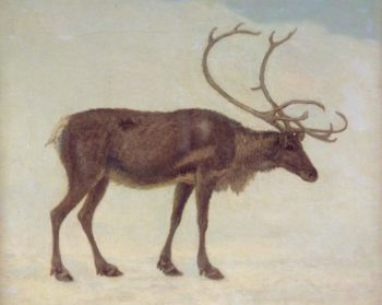 Reindeer | Jacques Laurent Agasse | oil painting