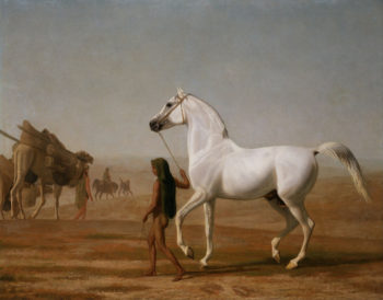 The Wellesley Grey Arabian Led through the Desert | Jacques Laurent Agasse | oil painting
