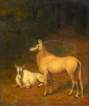 Two White Antelopes | Jacques Laurent Agasse | oil painting
