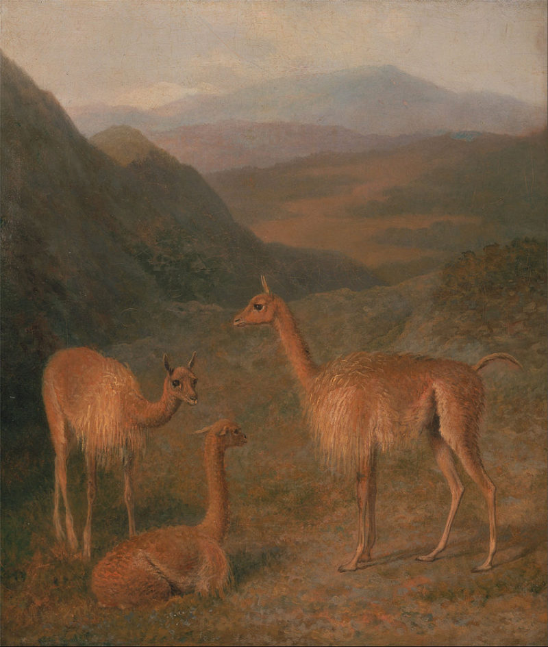 Vicunas   Jacques Laurent Agasse   oil painting