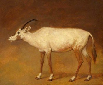 White Antelope | Jacques Laurent Agasse | oil painting