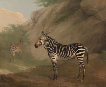 Zebra | Jacques Laurent Agasse | oil painting